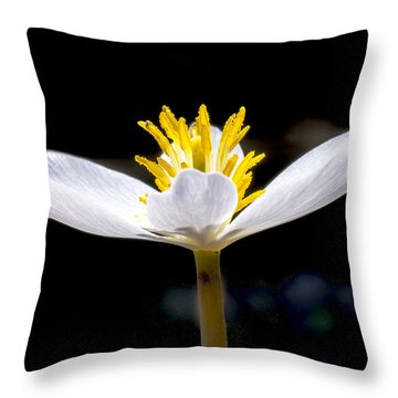 Bloodroot 1 Throw Pillow