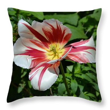 Throw Pillow featuring the photograph Bloom by Tara Potts