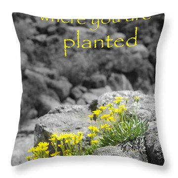 Bloom Where You Are Planted Throw Pillow by Debbie Karnes