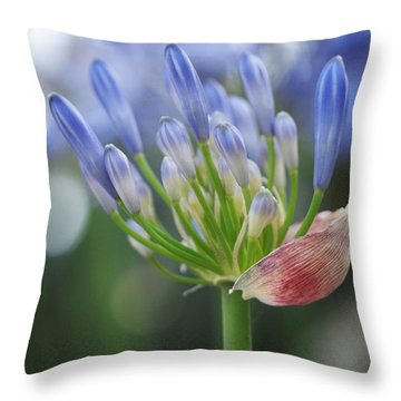 Blooming Agapanthus Throw Pillow by Rona Black