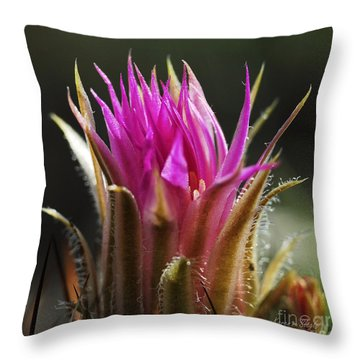 Blooming Barrel Cactus Throw Pillow