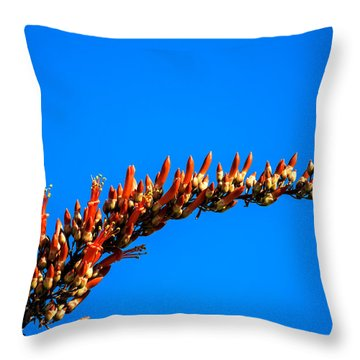 Blooming Ocotillo Throw Pillow by Robert Bales