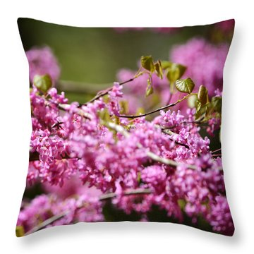 Blooming Redbud Tree Cercis Canadensis Throw Pillow by Rebecca Sherman
