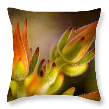 Blooming Succulents Iv Throw Pillow