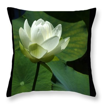 Blooming White Lotus Throw Pillow