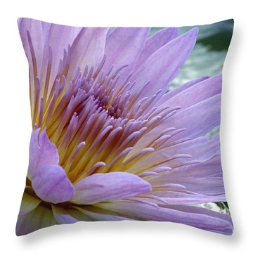 Bloom's Blush Throw Pillow