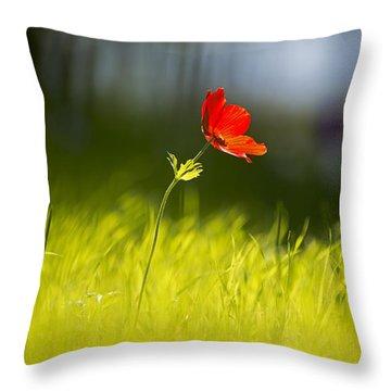 Blossomed Megiddo 1 Throw Pillow by Dubi Roman