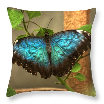 Blue And Black Butterfly Throw Pillow