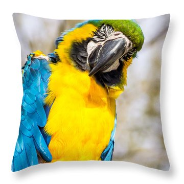 Blue And Gold Macaw Parrot Throw Pillow