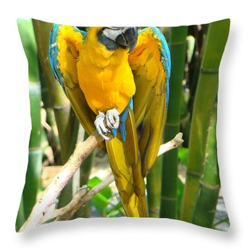 Throw Pillow featuring the photograph Blue And Gold Macaw by Phyllis Beiser