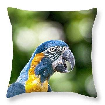 Blue And Gold Macaw V2 Throw Pillow by Douglas Barnard