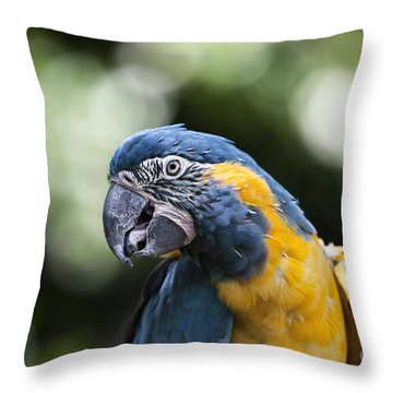 Blue And Gold Macaw V5 Throw Pillow by Douglas Barnard