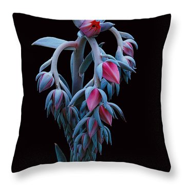 Blue And Pink Succulent Throw Pillow