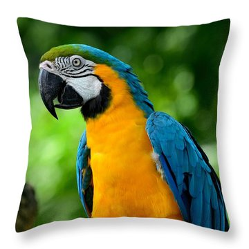 Blue And Yellow Gold Macaw Parrot Throw Pillow