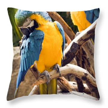 Blue And Yellow Macaw Pair Throw Pillow