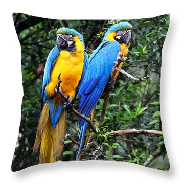 Blue And Yellow Macaws Throw Pillow