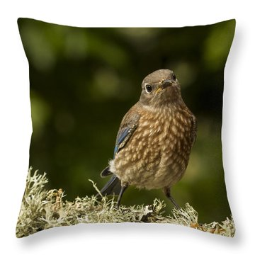Blue Baby Throw Pillow by Jean Noren