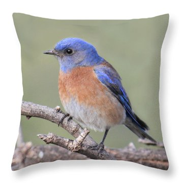 Blue Bird At Sedona Throw Pillow by Debbie Hart