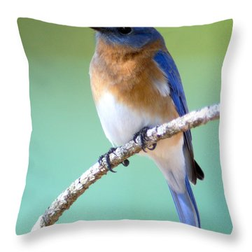 Blue Bird Portrait Throw Pillow