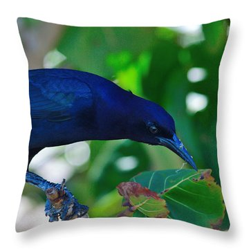 Blue-black Black Bird Throw Pillow