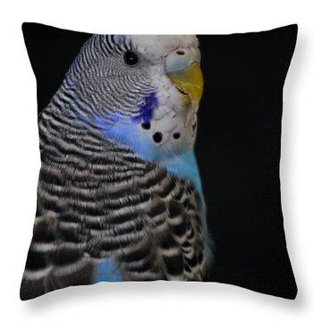 Blue Budgie Parakeet Throw Pillow by Nathan Abbott