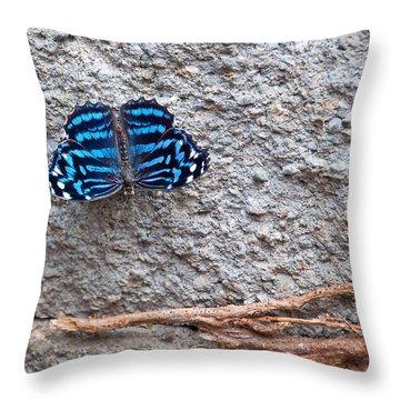 Blue Butterfly Myscelia Ethusa Art Prints Throw Pillow