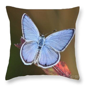 Blue Butterfly Square Throw Pillow by Carol Groenen