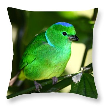 Blue Crowned Chlorophonia Throw Pillow by James Brunker