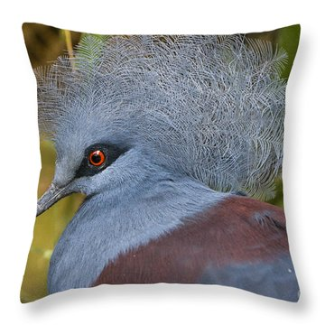 Blue-crowned Pigeon Throw Pillow by David Millenheft