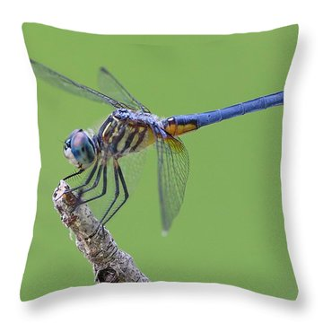 Blue Dasher Dragonfly Throw Pillow by Ester  Rogers