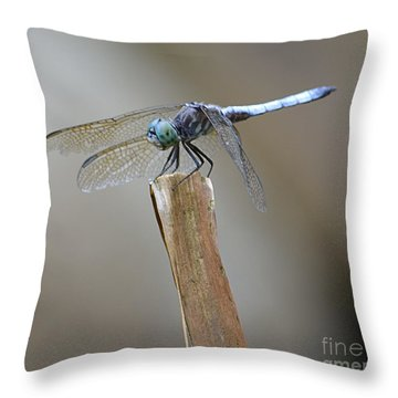Throw Pillow featuring the photograph Blue Dasher by Randy Bodkins