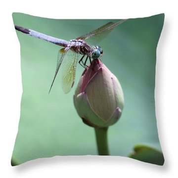 Blue Dragonflies Love Lotus Buds Throw Pillow