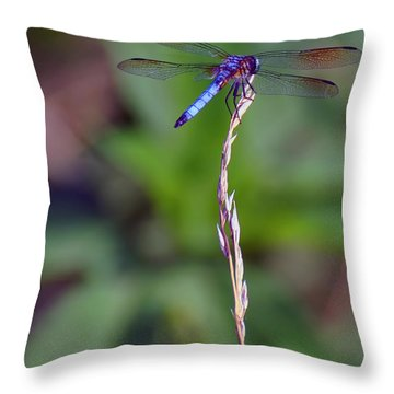 Blue Dragonfly On A Blade Of Grass  Throw Pillow by Chris Flees