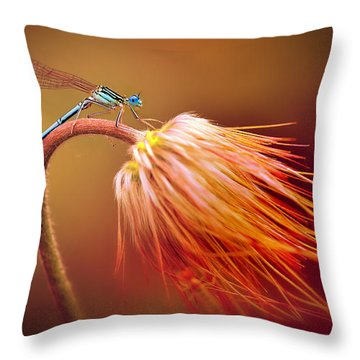 Blue Dragonfly On A Dry Flower Throw Pillow