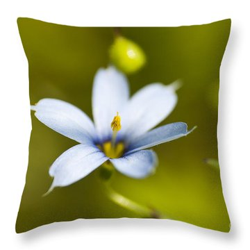 Blue-eyed Grass Flower Throw Pillow