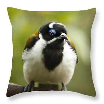 Blue Eyed Honeyeater Throw Pillow