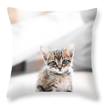 Blue Eyed Kitten Throw Pillow by Shelby  Young