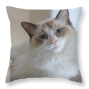 Blue-eyed Ragdoll Kitten Throw Pillow by Peta Thames