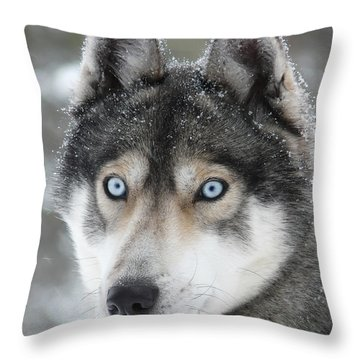 Blue Eyes Husky Dog Throw Pillow