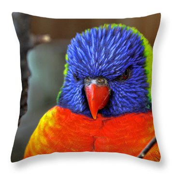 Blue Faced Rainbow Lorikeet Parrot Photograph by Terry Fleckney
