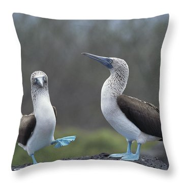 Blue-footed Booby Courtship Dance Throw Pillow by Tui De Roy
