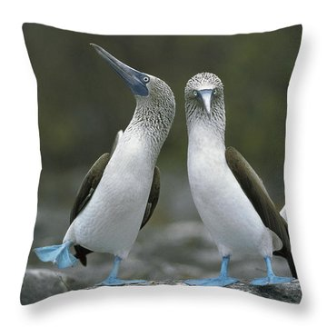 Blue Footed Booby Dancing Throw Pillow by Tui De Roy