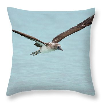 Blue-footed Booby In Flight Throw Pillow
