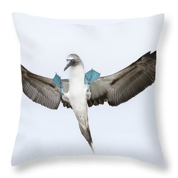 Blue-footed Booby Landing Galapagos Throw Pillow by Tui De Roy