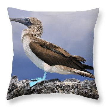 Blue-footed Booby Throw Pillow by Tony Beck
