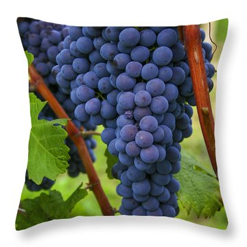 Blue Grapes Throw Pillow by Patricia Hofmeester
