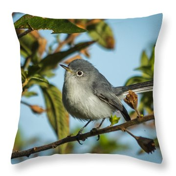 Blue-gray Gnatcatcher Throw Pillow