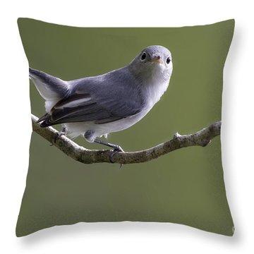 Blue-gray Gnatcatcher Throw Pillow by Meg Rousher