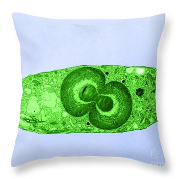 Blue Green Algae, Tem Throw Pillow by Jerome Pickett-Heaps
