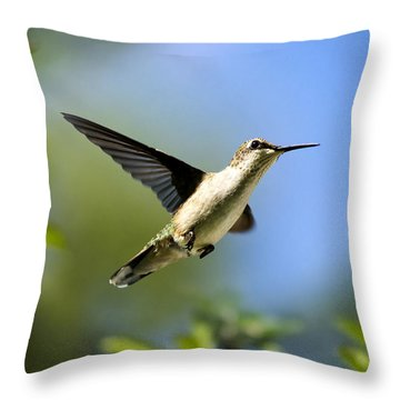 Blue Green Hummingbird Art Throw Pillow by Christina Rollo